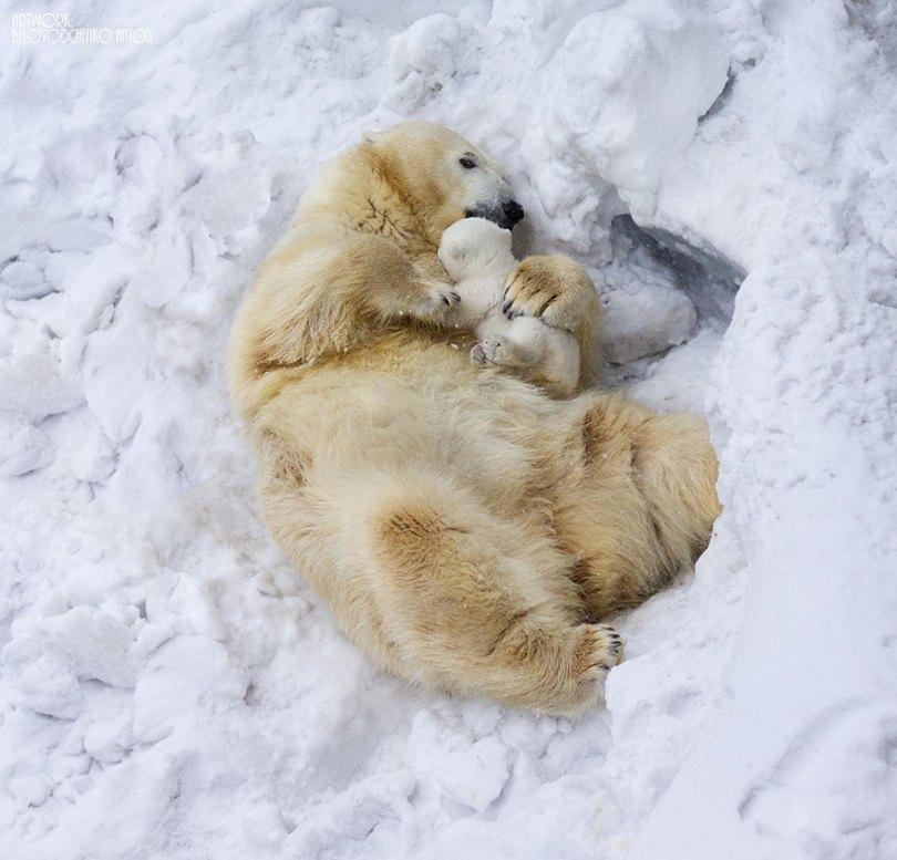 animal parents 3 2 - Momentos adoráveis dos pais com os filhotes no reino animal