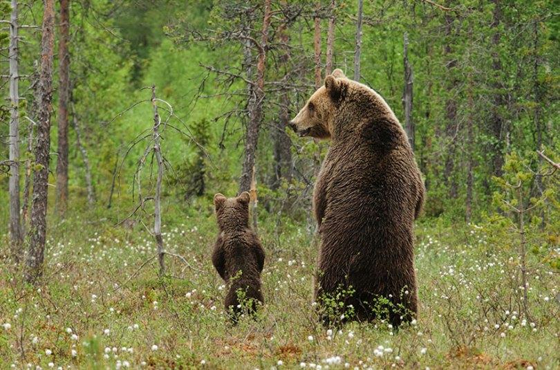 pais-animais-32