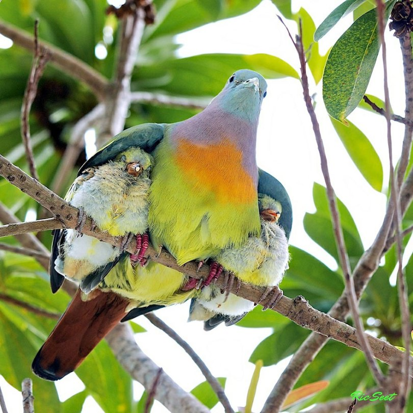 animal parents 4 - Momentos adoráveis dos pais com os filhotes no reino animal