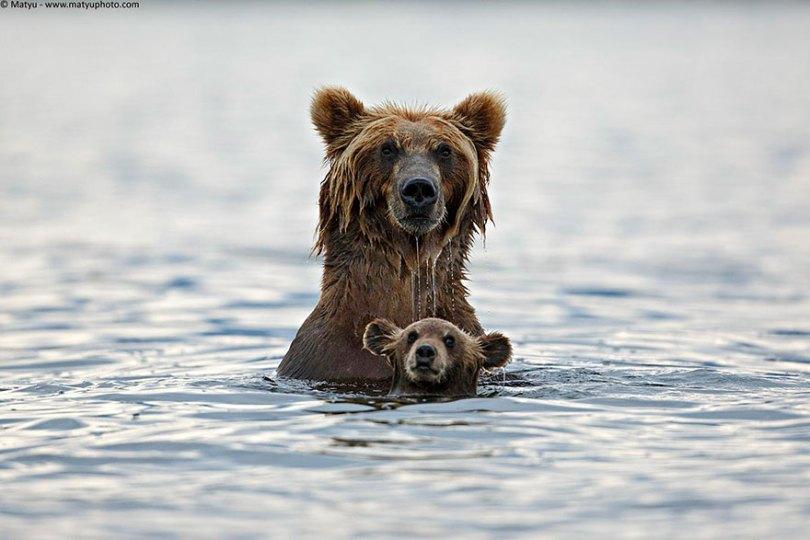 animal parents 9 - Momentos adoráveis dos pais com os filhotes no reino animal
