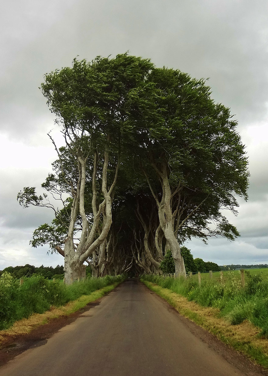 The Stunning Tree Tunnel You Saw On Game Of Thrones Is