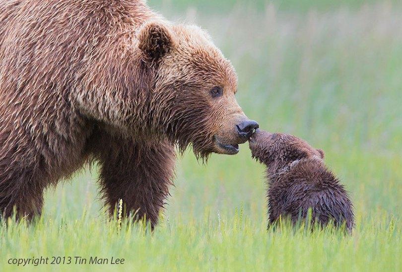 pais-animais-40