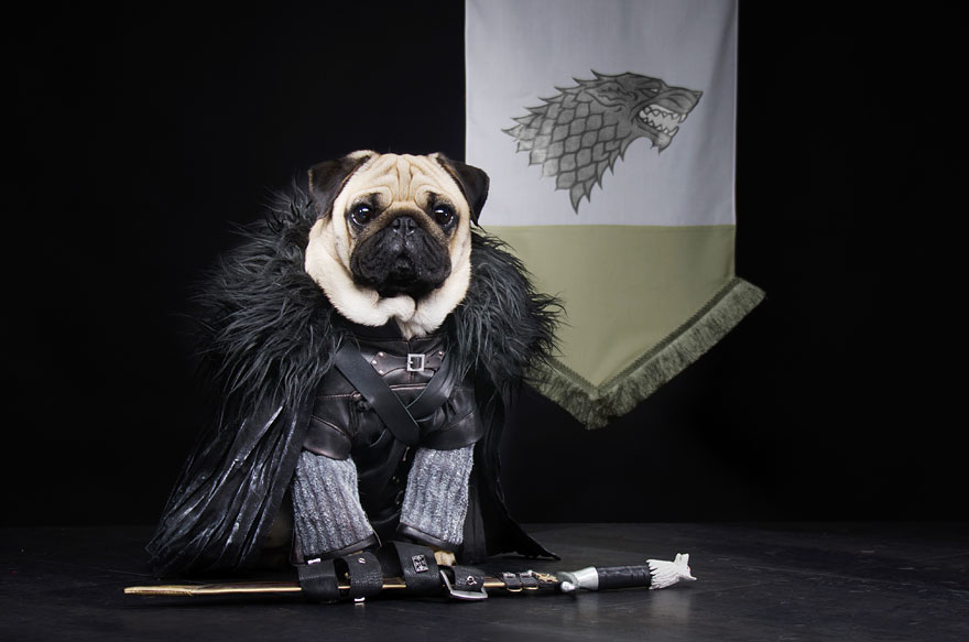 cute-pugs-game-of-thrones-pugs-of-westeros-2