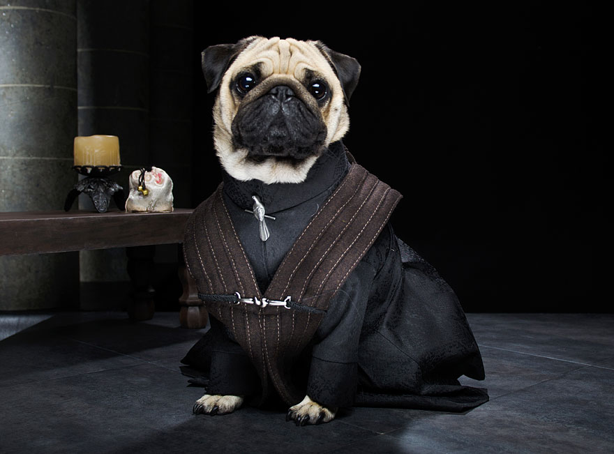 cute-pugs-game-of-thrones-pugs-of-westeros-7