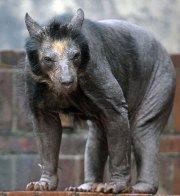 animals hair