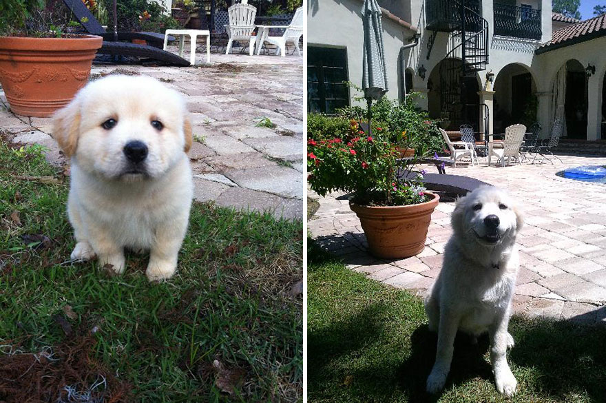 animals-before-after-then-now-48