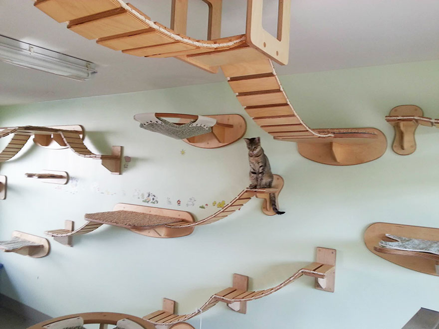 Delightful 25 Awesome Furniture Design Ideas For Cat Lovers Bored Panda
