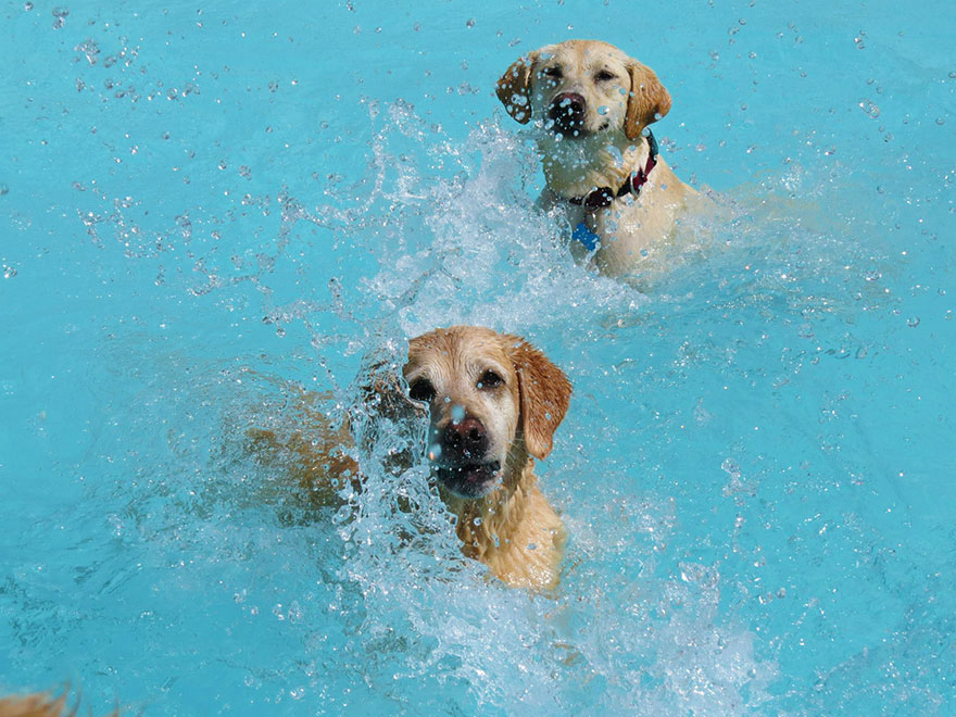 dog-pool-party-lucky-puppy-14