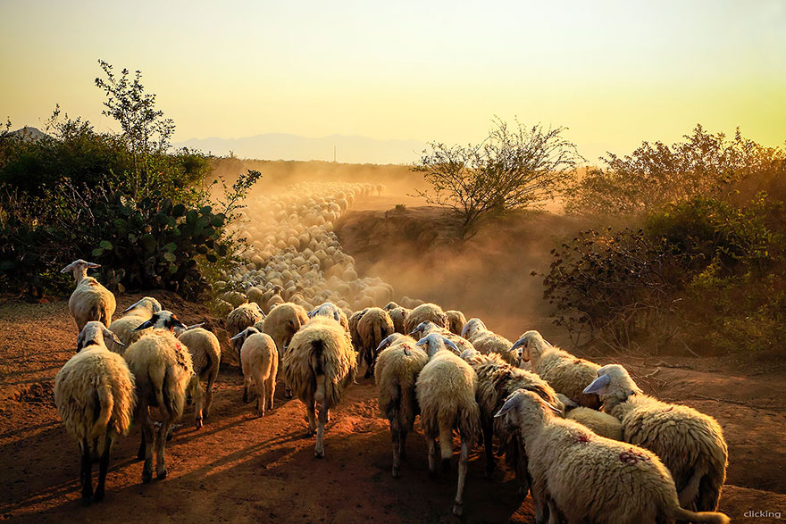 Iphone Wallpaper Changer App 25 Photos Of Sheep Blanketing The Earth Like Snow Bored