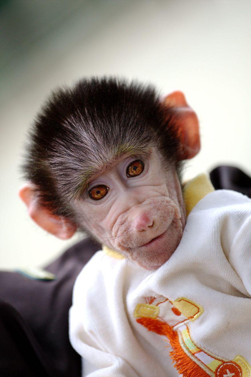 cute baby monkey from