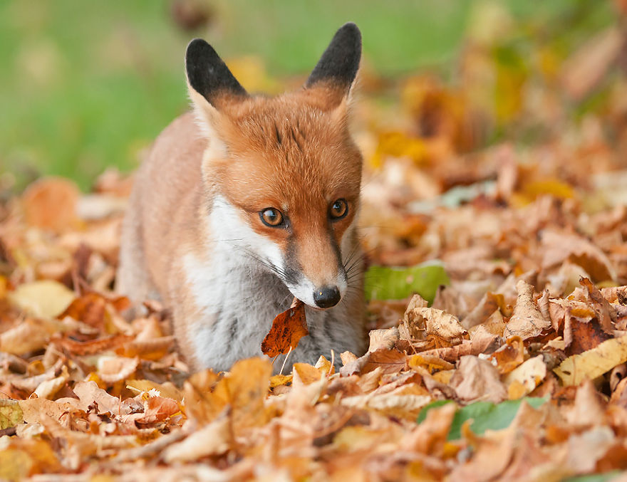 Fall Leaves Fox Wallpaper These 20 Beautiful Autumn Photos Will Inspire You To Grab
