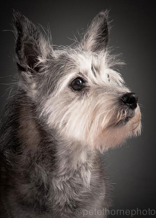 old-dog-portrait-photography-old-faithful-pete-thorne-8