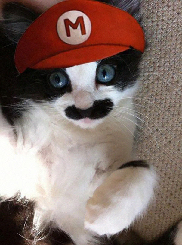 4 out of 5 stars with 3 ratings. 151 Terrifyingly Cute Halloween Costumes For Pets Bored Panda