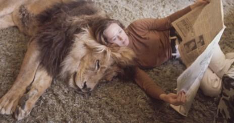 Risultati immagini per lion pet