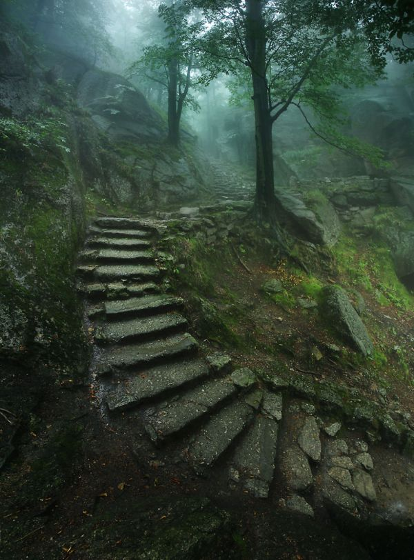 Nature Forest Stairs