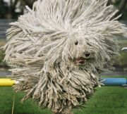 animals with majestic hair