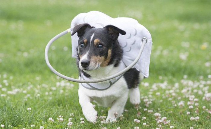 blind-dog-safety-device-muffins-halo-8