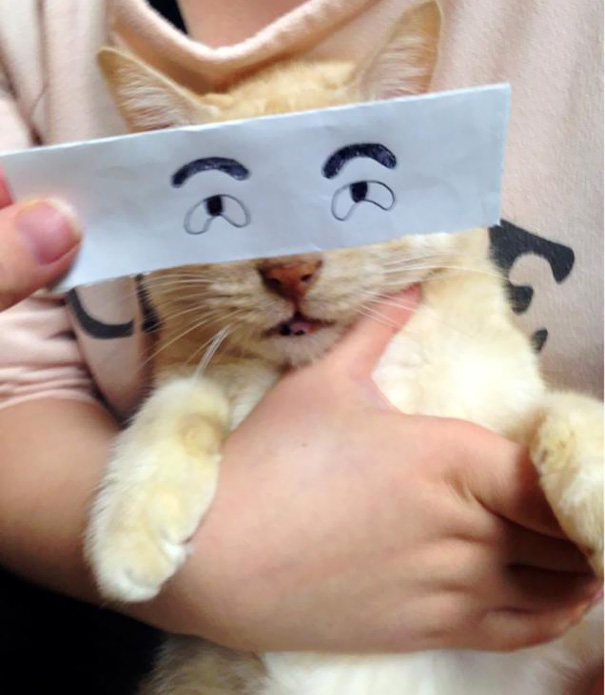 Cartoon Eyes On A Cat