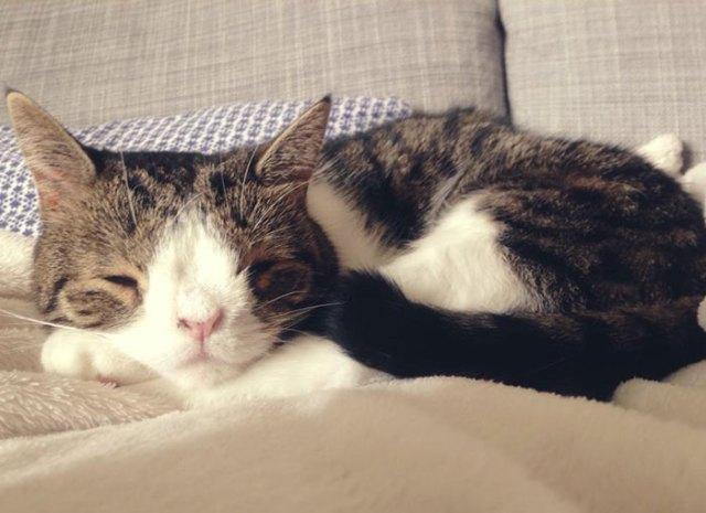cute-cat-without-nosal-bone-monty-15