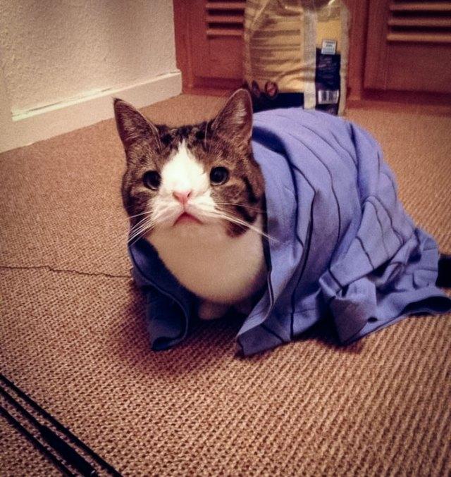 cute-cat-without-nosal-bone-monty-19