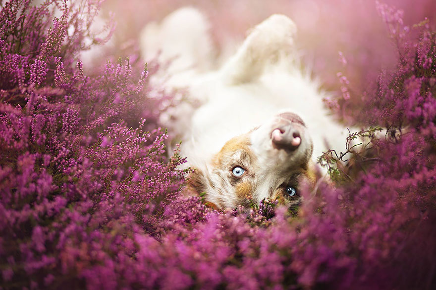 dog-photography-alicja-zmyslowska-23