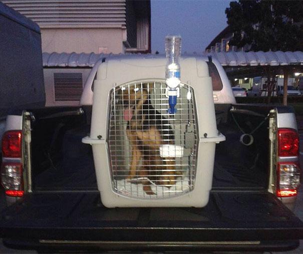 paralyzed-dog-puppy-rescue-thailand-canada-leo-5