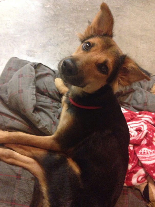 paralyzed-dog-puppy-rescue-thailand-canada-leo-7