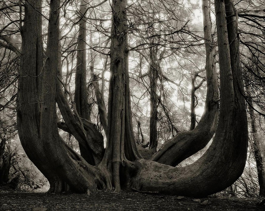 antichi alberi-Bet-moon-14