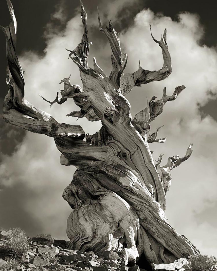 antichi alberi-Bet-moon-15