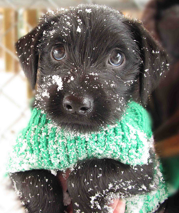 Puppy Discovers Snow For The First Time
