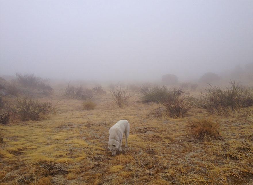 dog-adventures-john-stortz-1