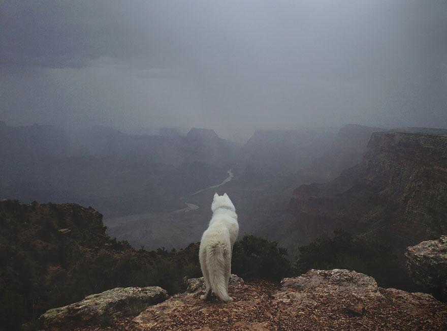 dog-adventures-john-stortz-21