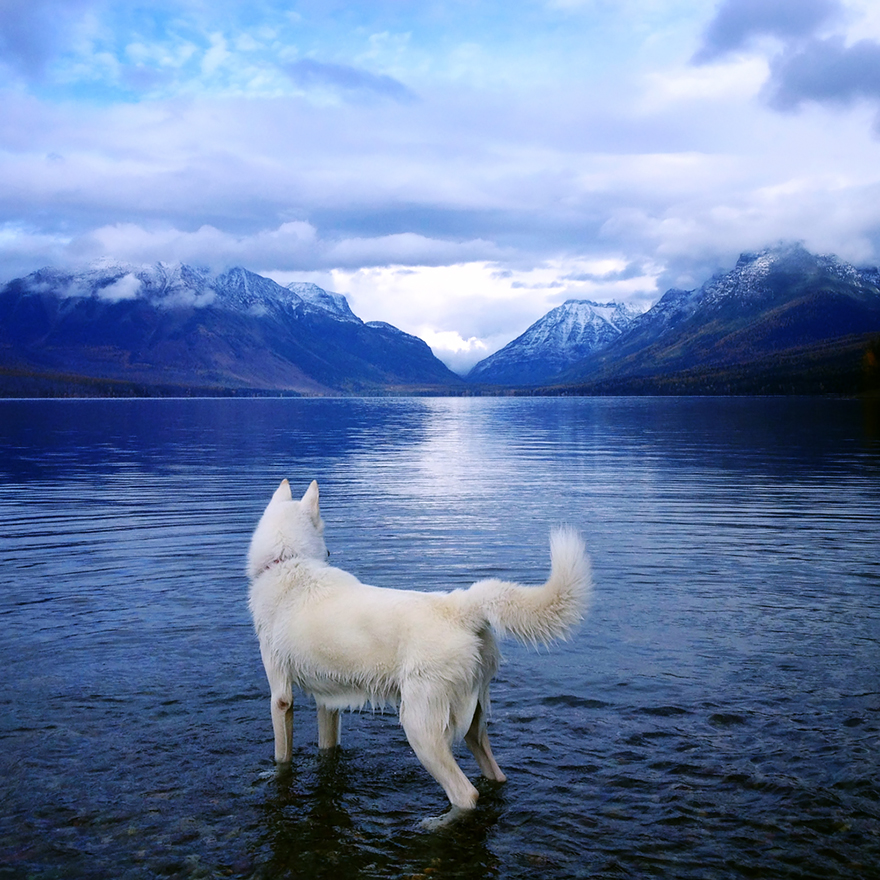 dog-adventures-john-stortz-29
