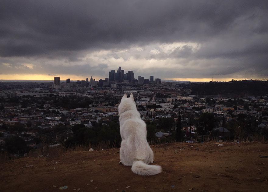 dog-adventures-john-stortz-7