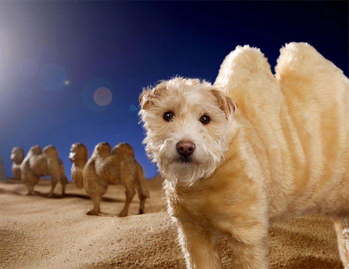 Every Christmas This Photographer Turns His Dog Into