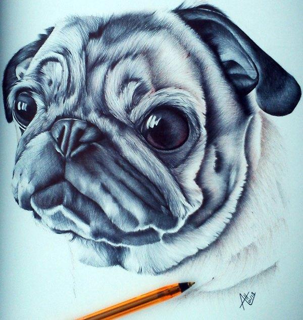 Ballpoint Pen Drawings Animal