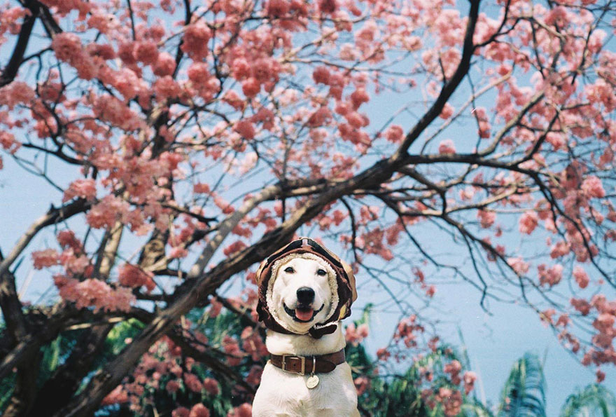 happy-dog-photography-gluta-thailand-20
