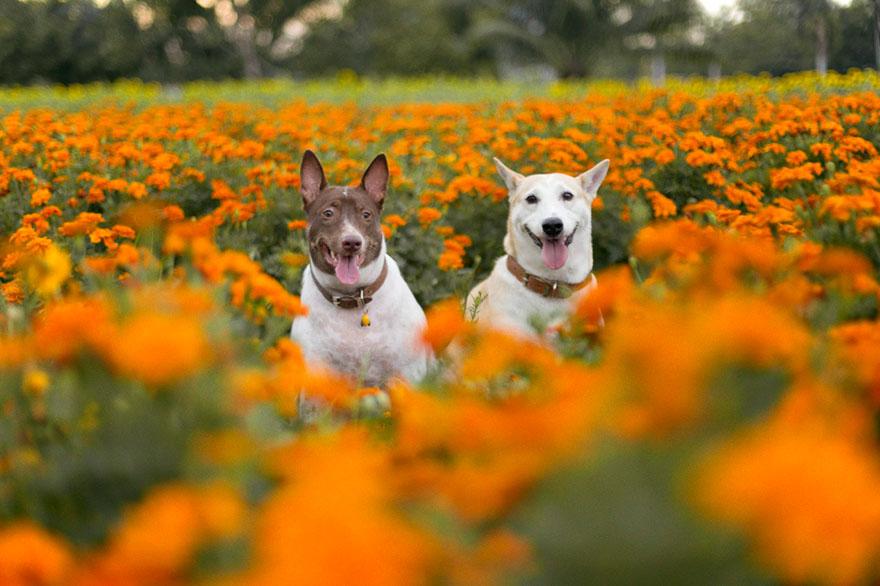 happy-dog-photography-gluta-thailand-23