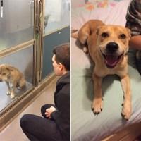 Antes Y Después De Ser Adoptadas