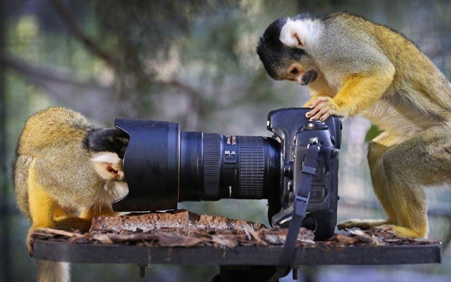Monkeys Checking Camera