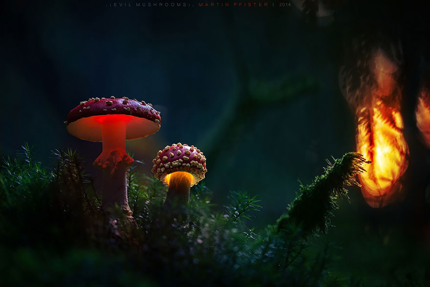 Mystical Creatures In The Fall Wallpaper Glowing Mushrooms Come To Life In A Fairytale World By
