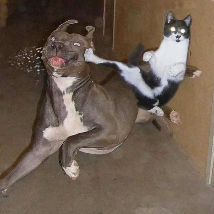 ninja cat hiding funny 105  605 - 20+ Ninja Cats That Have Mastered The Ancient Art Of Ninjutsu