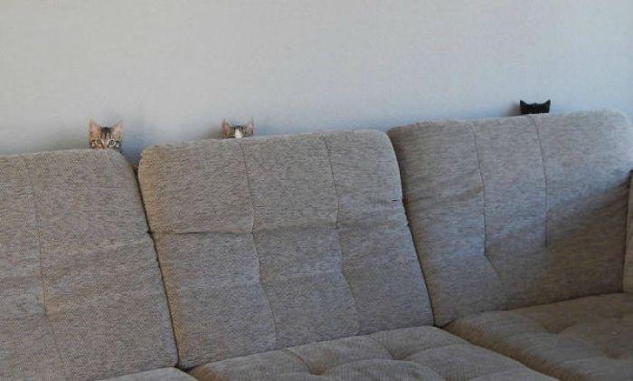 ninja cat hiding funny 53  605 - 20+ Ninja Cats That Have Mastered The Ancient Art Of Ninjutsu