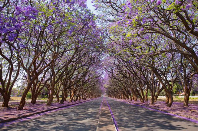 Milton Avenue, Harare, Zimbabwe