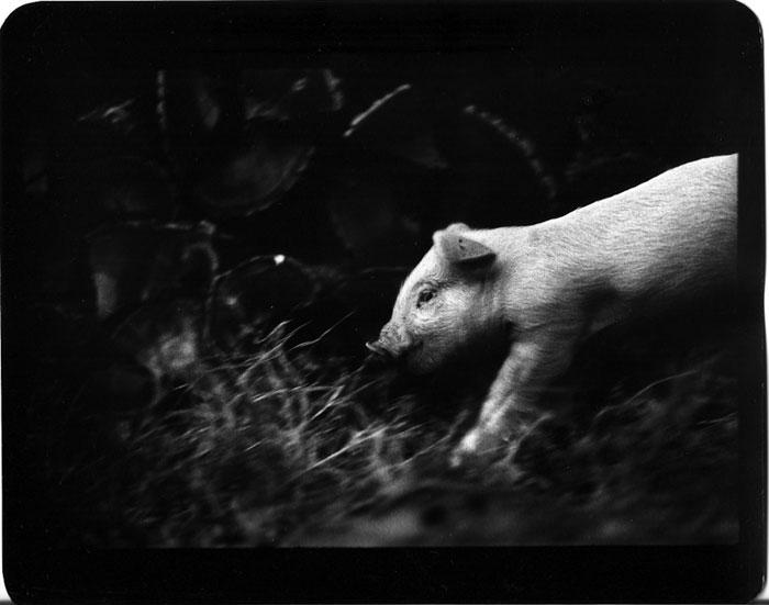 animal-photography-miranda-camera-giacomo-brunelli-1