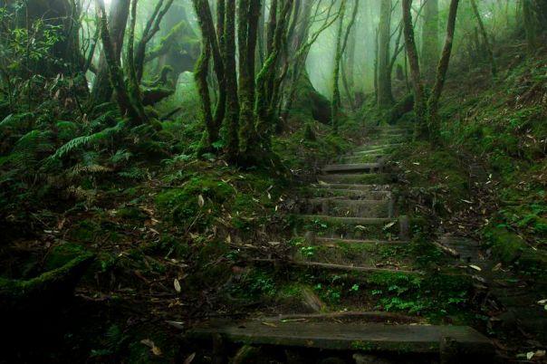 China Hemlock Trail, Taipingshan, Taiwán