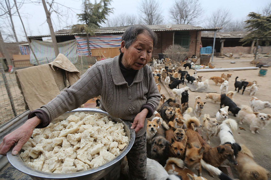 china-1300-stray-dog-shelter-wang-yanfang-2