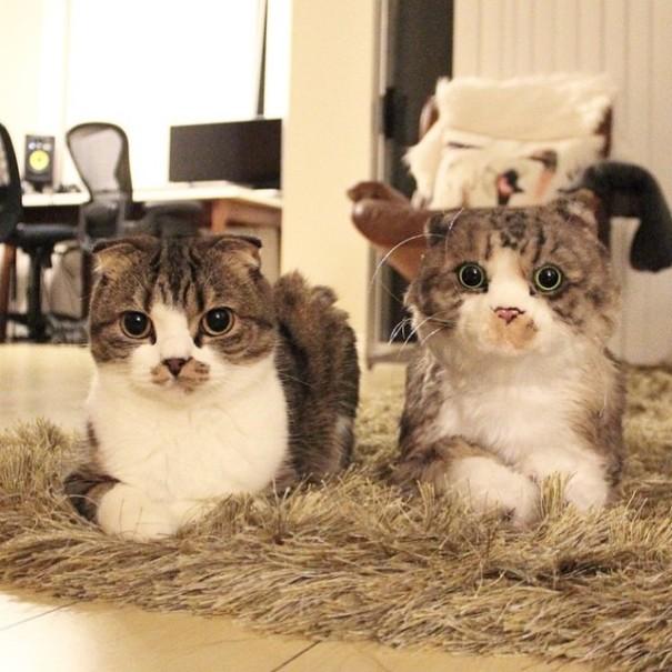 pet-copy-custom-plush-toys-cuddle-clones-10
