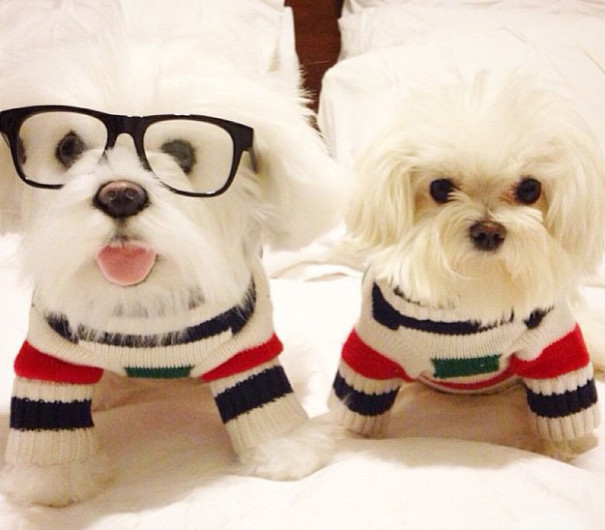 pet-copy-custom-plush-toys-cuddle-clones-16