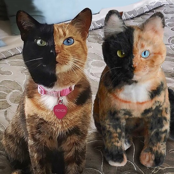 pet-copy-custom-plush-toys-cuddle-clones-21